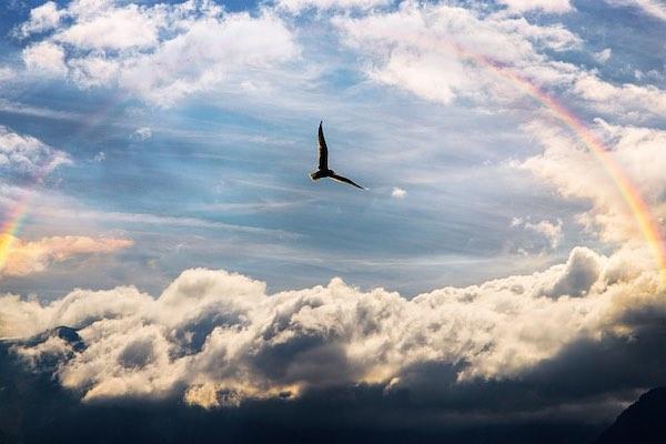 gaviota volando libremente